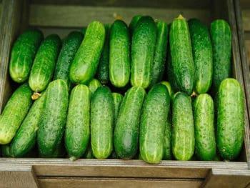 Keep Cucumber Fresh